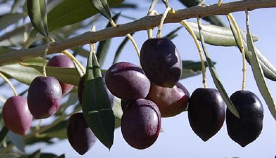 Olio extra vergine d'oliva Holiday in trulli
